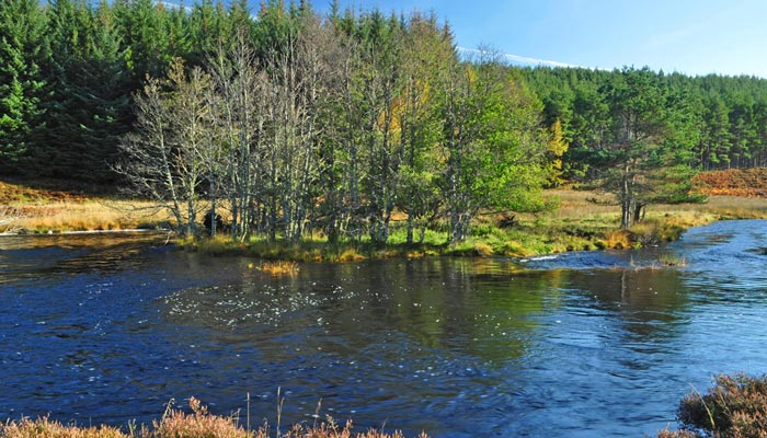troutquest brown trout fishing, river alness, ross-shire, scotland, novar fishings